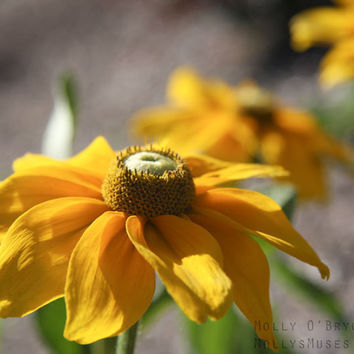 Yellow Flower Art Print - Rustic Decor -Nature Photography