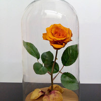 Preserved rose/Beauty and the beast rose/disney/fairytale/romantic/white roses/glass and rose/rose in a bottle/glass dome/wedding/engagement