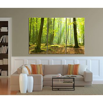 Large Canvas Art Print Morning in Forest Forest Sunrise Large Wall Art Print Extra Large 3