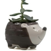 Hedgehog Mini Ceramic Planter