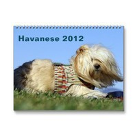 2012 Calendar to benefit Havanese rescue from Zazzle.com