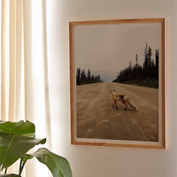 Kevin Russ Road Fox Art Print   Urban Outfitters