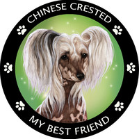 Chinese Crested Hairless My Best Friend Magnet