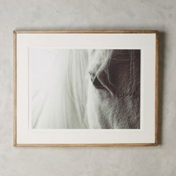 Coup & Co. Quiet Horse Wall Art in Black & White Size: One Size Decor