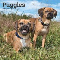 Puggles Wall Calendar, Puggle by BrownTrout