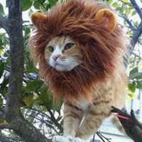 Cat Costume, Cat hat, cat lion hat, lion mane for cat, cat gift, gifts for pets, hats for cats, small cat, the360shop, cats, cat lady