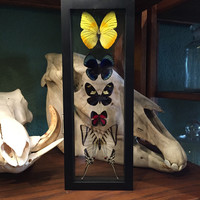 """5 Peruvian Butterfly Collection 12.5""""x 4.5"""""""