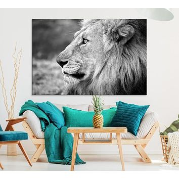 African Lion Extra Large Wall Art Canvas Print