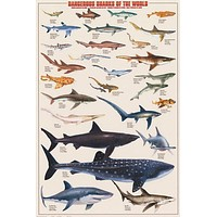 Dangerous Sharks of the World Education Poster 24x36