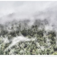 """""""Mountain light III"""". Foggy forest. by Guido Montañés"""