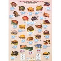Turtles and Tortoises Education Poster 27x39