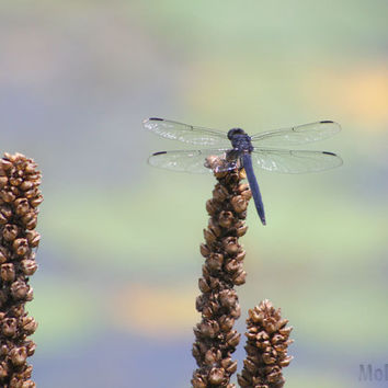 Dragonfly Photography - Pastel Nature Photo - Kids Bedroom Nursery
