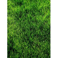 Green Grass Printed Floor or Backdrop - 286