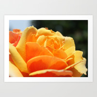 gorgeous golden rose flower close up shot. floral photography. Art Print by NatureMatters