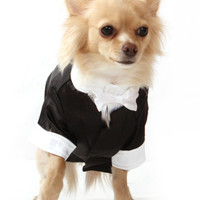 Big Day Tuxedo with Bow Tie Collar | Image 5 | Chihuahua Clothes and Accessories at the Famous Chihuahua Store!