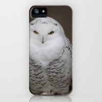 Snowy owl iPhone & iPod Case by robdickinsonphotodesign