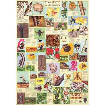 Bees and Wasps Insect Education Poster 27x39