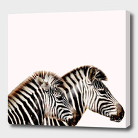 «zebras» Canvas Print by Suzanne Carter - Numbered Edition from $59   Curioos