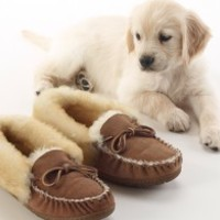 Puppies love Wicked Good Slippers