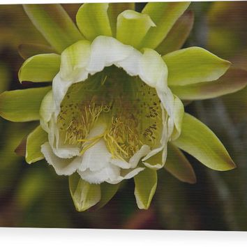 Cactus Flower 1 Wood Print
