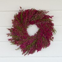 Dried Hanging Amaranth Bunch