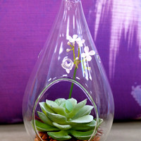 "Du Pot Cactus in Oval Glass - B 7""H"