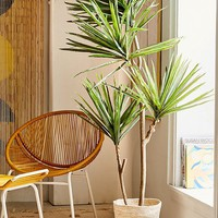 Yucca 6' Potted Faux Tree | Urban Outfitters