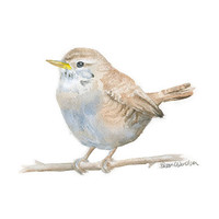 Wren Bird Watercolor Painting - 5 x 7 - Bird Painting - Woodland Animal - Giclee Print Reproduction