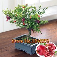 20pcs/ bag, bonsai pomegranate seeds, very sweet Delicious fruit seeds,succulents Tree seeds, bonsai plant for home & garden pot