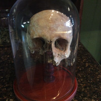 Antique Female Human Skull with Glass Dome