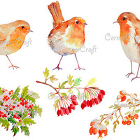 Digital watercolour Christmas robins and red berries in snow instant download scrapbook watercolor cards christmas greeting cards set1