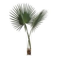 Delta Palmettos Botanical Arrangement