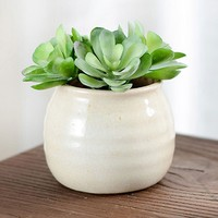 Succulent Plant Decor