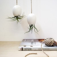 Hanging Air Plant Planter - Silky Matte White by mudpuppy
