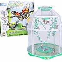 Uncle Milton Butterfly Farm Live Habitat - Observe Butterfly Lifecycle - Nature Learning Toy
