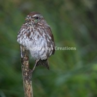 Little Bird Perched on a Stick with a Bug photograph 8x10