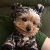 Leopard Costume for Dogs - Teacup size