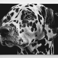 Dalmatian Wall Art -  Dog Portrait - All breeds - Ready to hang - Perfect gift for dog lovers!