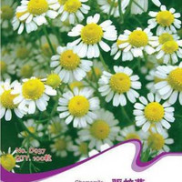 1 Pack Chamomile Seeds Heirloom Herb Seeds Organic Plant seed Garden LSCA .L