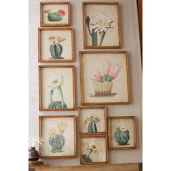 Set Of 9 Cactus Flower Prints Under Glass