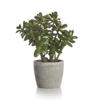 Potted Artificial Jade Plant