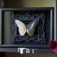 Preserved De-scaled Blue Clipper Butterfly Shadow Frame Display by TheButterflyBabe