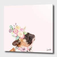 «Koko» Aluminum Print by Suzanne Carter - Numbered Edition from $74.9   Curioos