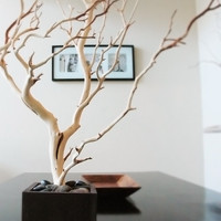 30 Natural Tree Jewelry holder by heartnotincluded on Etsy