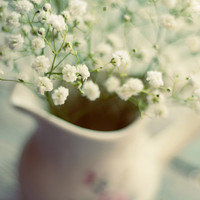 Country chic photograph- flower, babys breath, white, rustic, romantic, floral decor, ethereal, milk pitcher, flower photograph, teal, print