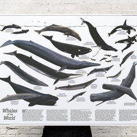 Great Whales of the World (1976) Poster