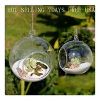 8pieceS DIA 8CM hanging round glass air plant terrariums bubble crystal balls flower globe vase for wedding ceiling decorations