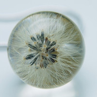 Whole Dandelion Necklace Real Dandelion Make a Wish Eco Resin Globe Dandelion Clock Ball Specimen Tiny Small Blow Ball