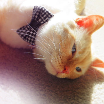 Houndstooth Cat Bow Tie Colar