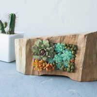 Green Blue Orange Succulent Decor Decoration Wooden Frame Base Basis Planted Succulents Home Decor Accessory Housewarming Birthday Gifts